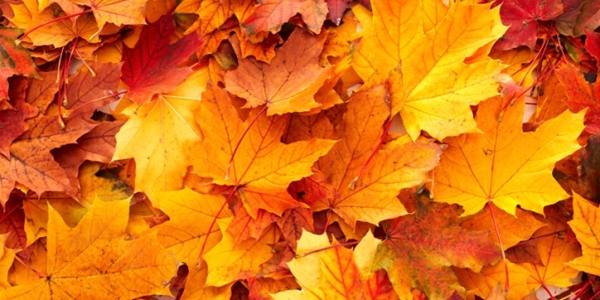 autumn leaves new_0