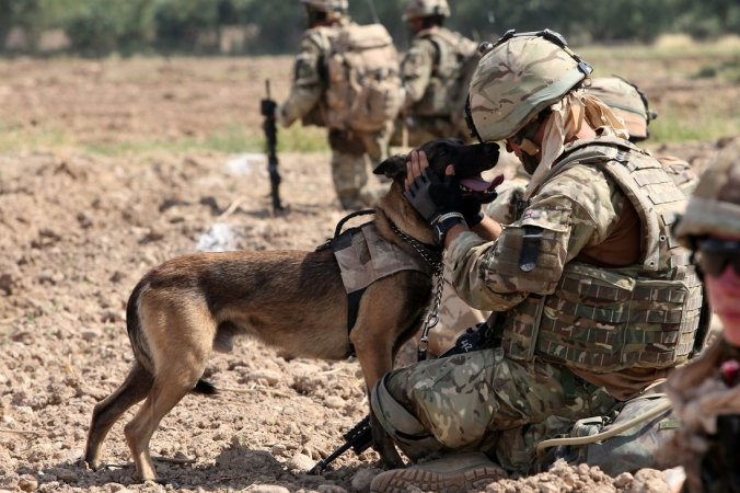military_dog_by_militaryphotos-d54xw3v.jpg