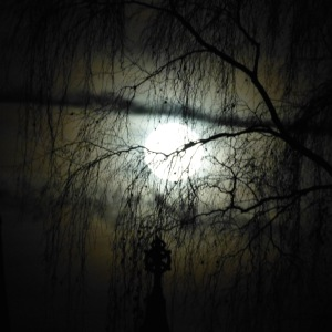 trees-and-moon-1
